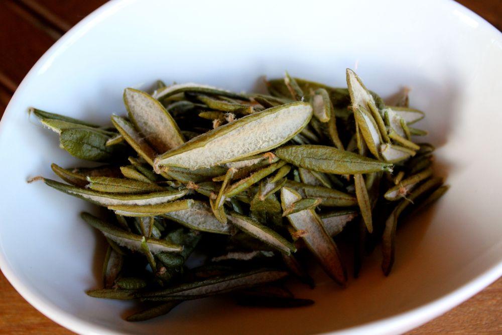 Labrador tea (Rhododendron groenlandicum, Rhododendron tomentosum)   (3/3)