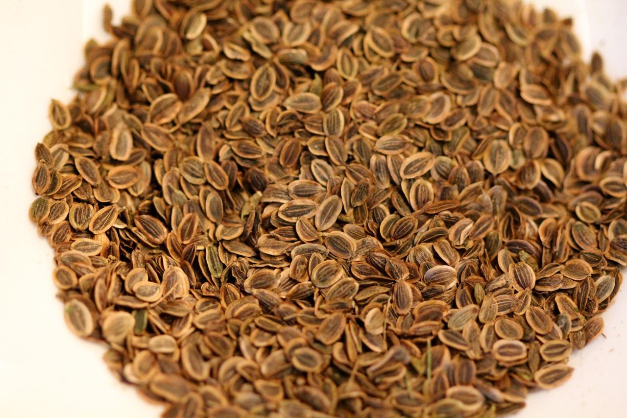 dill seed | cabinorganic