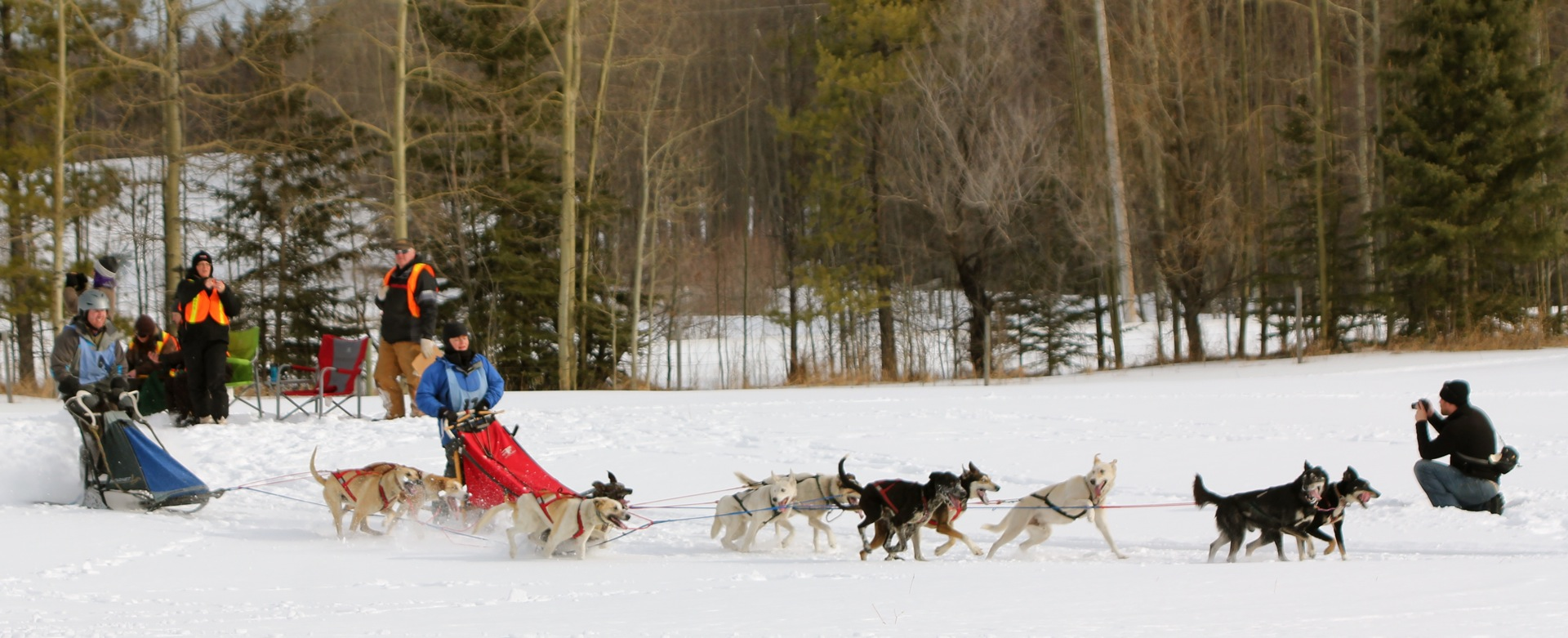 sled dogs cabinorganic