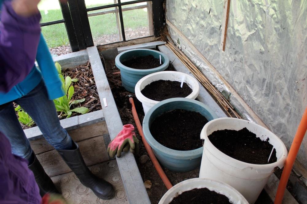 E plants her first garden (4/4)