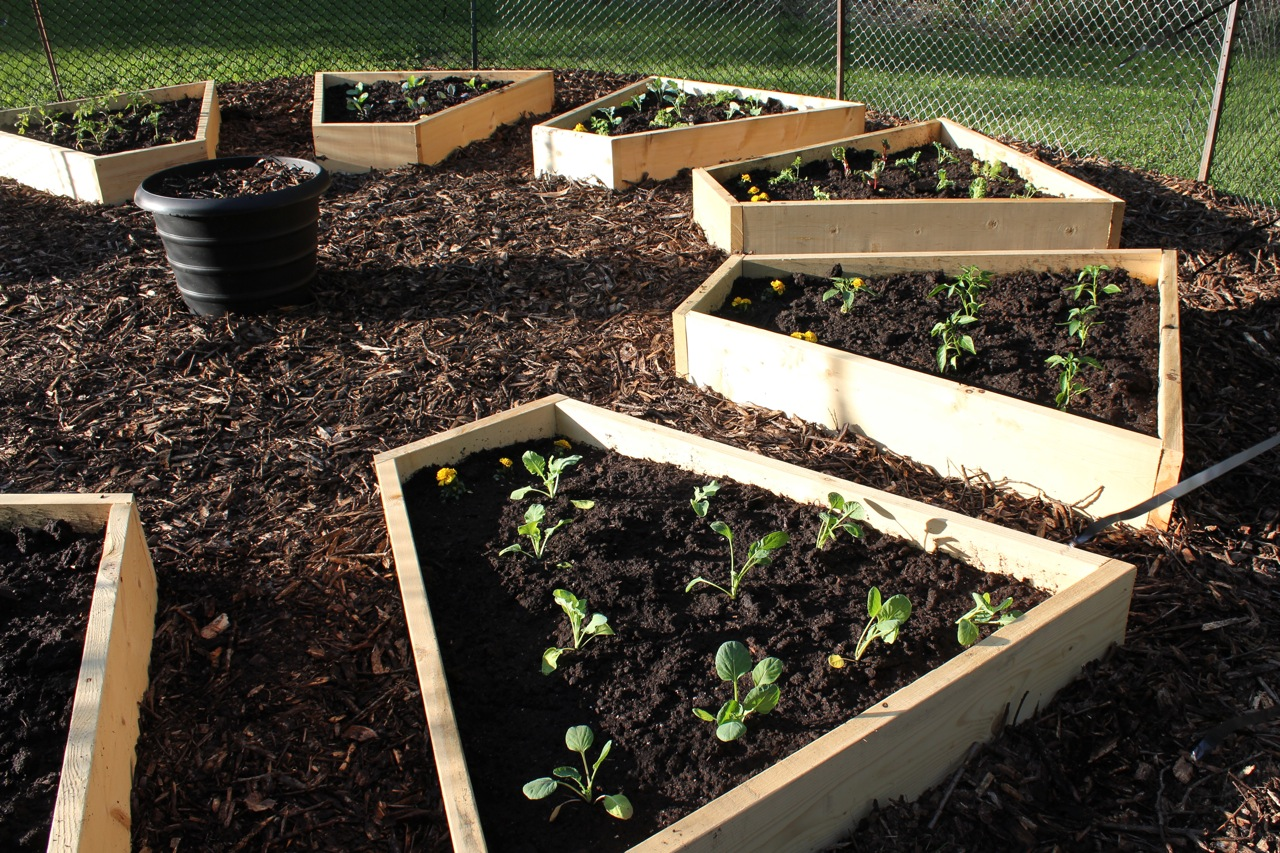 Raised beds in the medicine wheel garden cabinorganic Raised garden beds