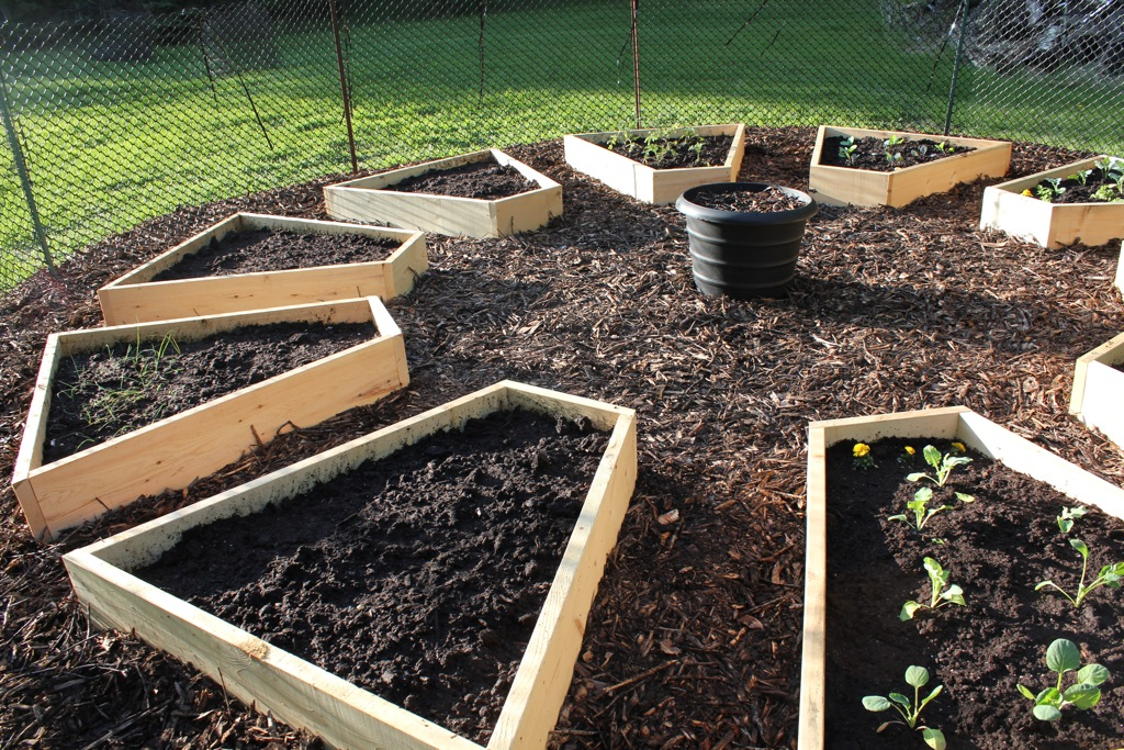 Checking in on the raised bed garden cabinorganic for Circular raised garden bed ideas