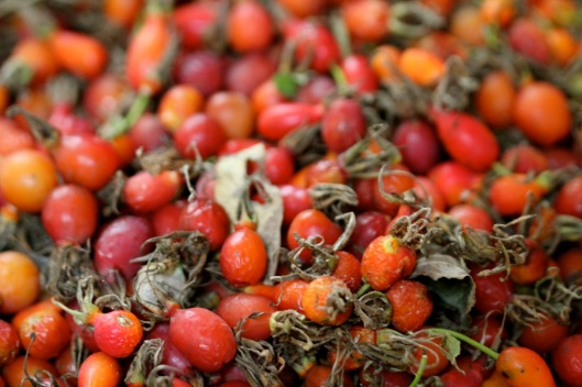 Rose hips cabinorganic - Rosehip syrup health benefits ...
