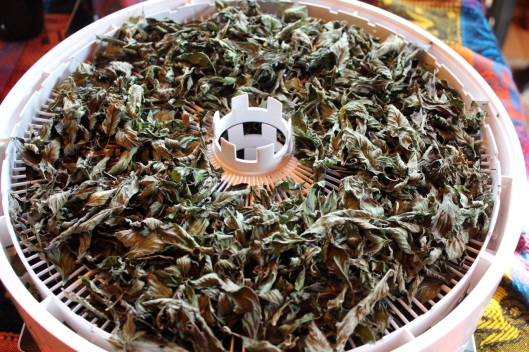 dried pepermint tea