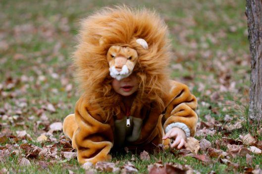 Halloween costume, lion costume